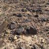 Пустыня по дороге к Массаде, с обоженным камнями