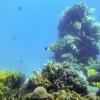 """Поездка в Израиль 2014: Музей """"Аквариум"""", подводный мир"""