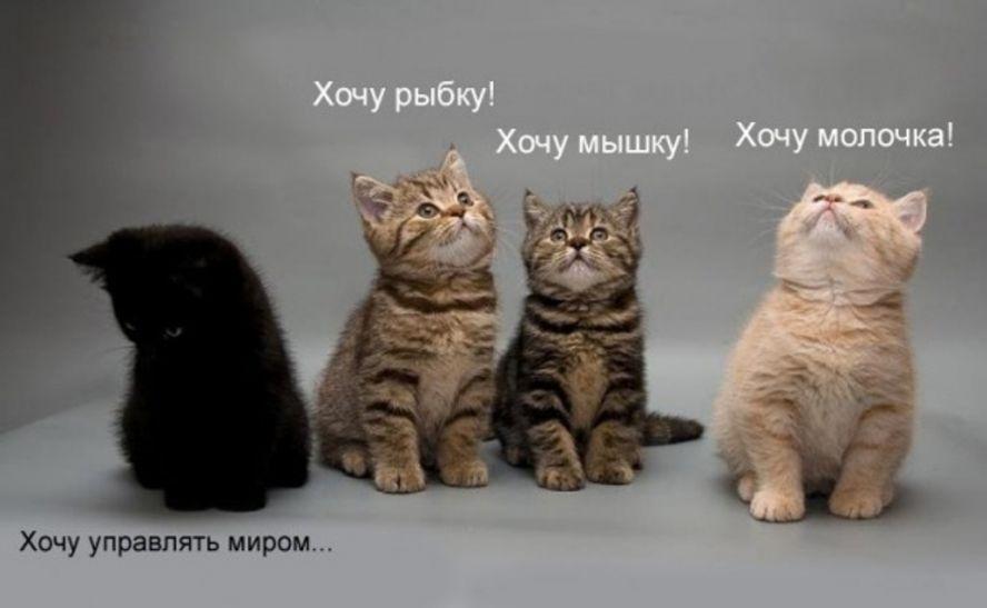 """""""Зоотерик"""", адепт современной поп-эзотерики - 3"""