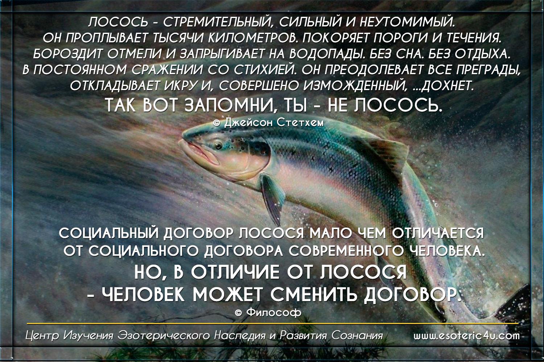 """""""Социальный Договор лосося, мало чем отличается от Договора современного человека. Но Человек - не лосось..."""""""